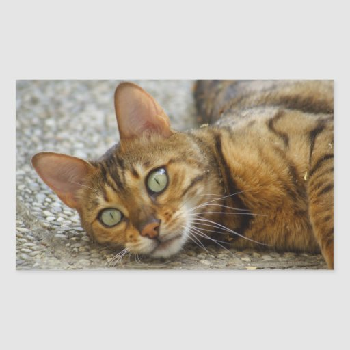 Adorable Bengal Cat Rectangle Sticker