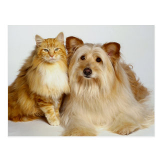 Adorable Best Friends Dog and Cat Photo Postcard
