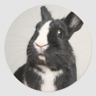 Adorable Black and White Bunny Rabbit Classic Round Sticker