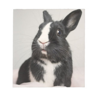 Adorable Black and White Bunny Rabbit Notepad