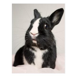 Adorable Black and White Bunny Rabbit Postcard