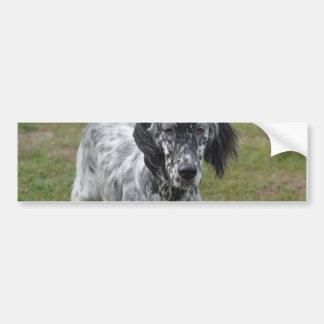 Adorable Black and White English Setter Bumper Sticker