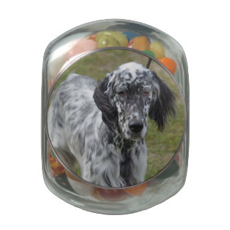 Adorable Black and White English Setter Dog Glass Jars