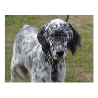 Adorable Black and White English Setter Dog Postcard