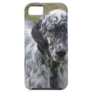 Adorable Black and White English Setter iPhone SE/5/5s Case