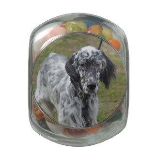 Adorable Black and White English Setter Jelly Belly Candy Jars