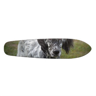 Adorable Black and White English Setter Skateboard Deck