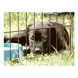 Adorable Black Puppy  Post Cards