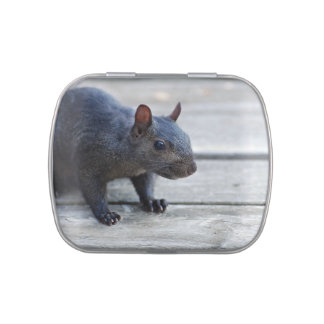Adorable Black Squirrel Jelly Belly Tins