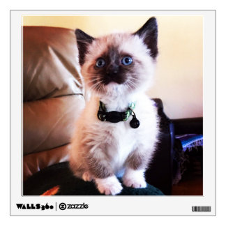 Adorable Blue Eyed Masked Kitten Photograph Wall Decal