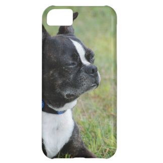 Adorable Boston Terrier Cover For iPhone 5C