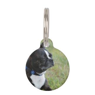 Adorable Boston Terrier Pet Nametag