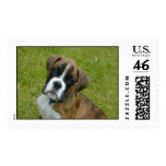 Adorable Boxer Puppy Stamp