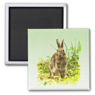 Adorable Brown Bunny Rabbit in Green Grass Magnet