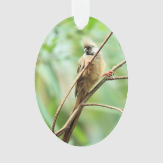 Adorable Brown Speckled Mousebird Africa Bird Ornament