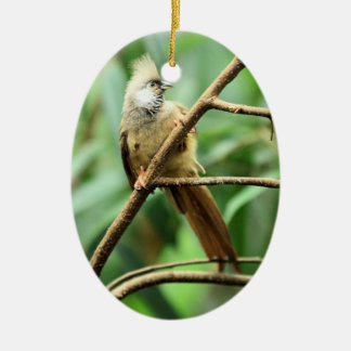 Adorable Brown Speckled Mousebird Colius Striatus Ceramic Ornament