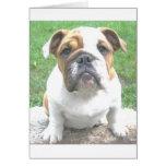 adorable bulldog puppy greeting cards