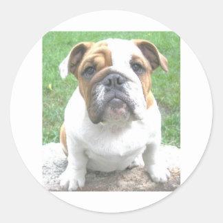 adorable bulldog puppy classic round sticker