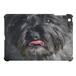Case Savvy iPad Mini Glossy Finish Case with Cairn Terrier Phone Cases design