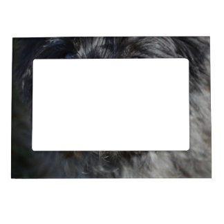 Adorable Cairn Terrier Magnetic Photo Frame