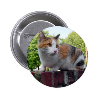 Adorable cat on red brick wall 2 inch round button
