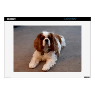 "Adorable Cavalier King Charles Spaniel 15"" Laptop Skins"