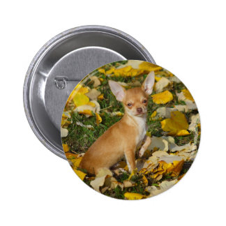 Adorable Chihuahua Puppy Between Yellow Leaves Pinback Button