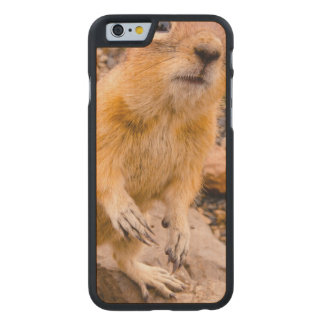 Adorable Chipmunk Carved® Maple iPhone 6 Case
