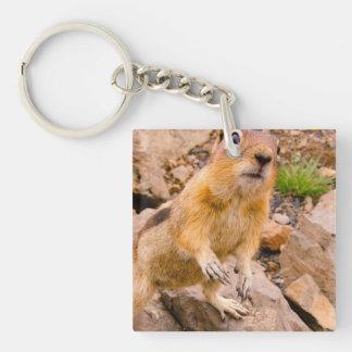 Adorable Chipmunk Acrylic Key Chains