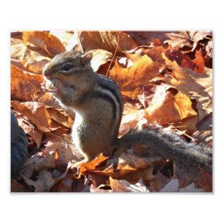 Adorable Chipmunk with Peanut Photo Print