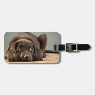 Adorable Chocolate Lab Puppy Design Luggage Tag