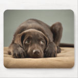 Adorable Chocolate Lab Puppy Design Mouse Pad
