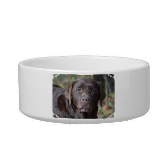 Adorable Chocolate Labrador Retriever Cat Food Bowl