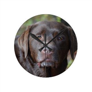 Adorable Chocolate Labrador Retriever Round Wall Clocks