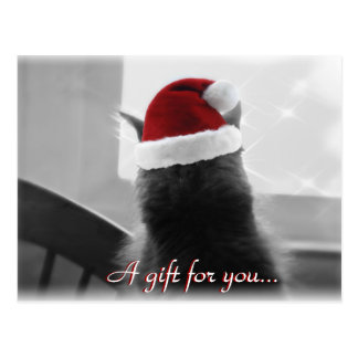 Adorable Christmas Cat Gift Certificate Postcard