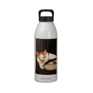 Adorable Chubby Orange Tabby Cat  picture Reusable Water Bottle