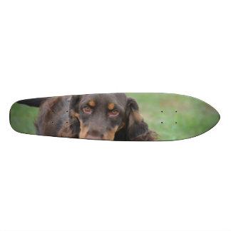 Adorable Cocker Spaniel Skate Board Decks
