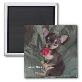 Adorable Cute Baby Chihuahua Merry Rose magnet