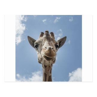 Adorable & Cute Giraffe Head Gift Product Postcard