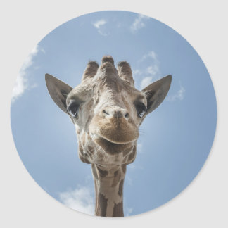 Adorable & Cute Giraffe Head Gift Product Round Stickers