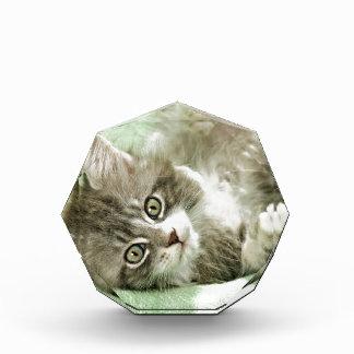 Adorable Cute Grey Tabby Kitten Paw Play Tapping Acrylic Award