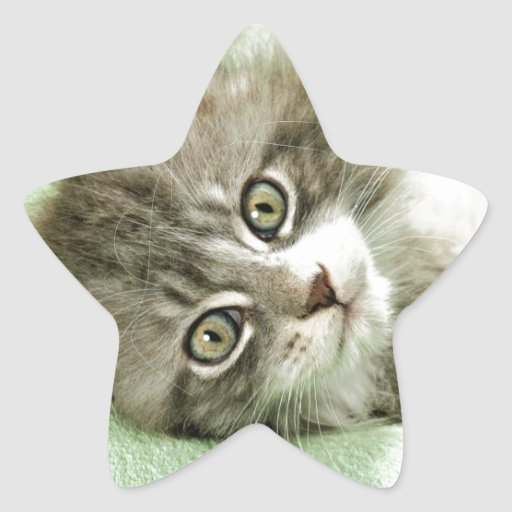 Adorable Cute Grey Tabby Kitten Paw Play Tapping Star Sticker
