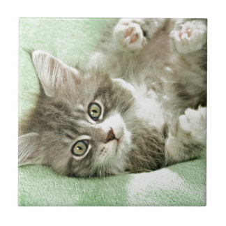 Adorable Cute Grey Tabby Kitten Paw Play Tapping Tile