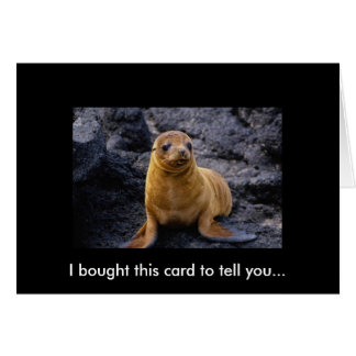 Adorable Cute Harbor Seal Pup On The Rocks Card