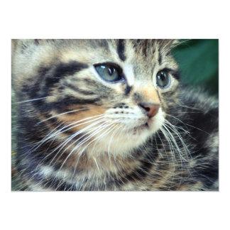 Adorable Cute Kitten Card