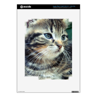 Adorable Cute Kitten Decals For iPad 3