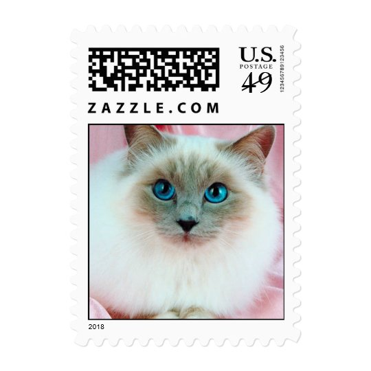 Adorable cute pedigree cat postage