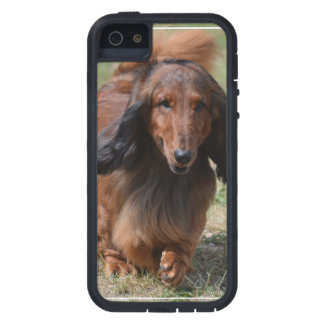 Adorable Dachshund iPhone 5 Covers