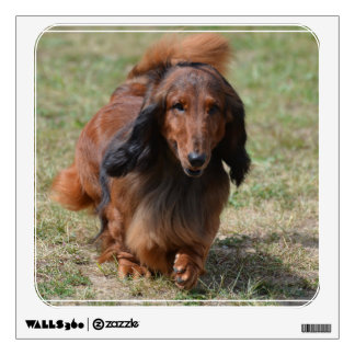 Adorable Dachshund Wall Decals