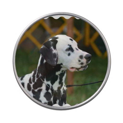 Adorable Dalmatian Jelly Belly Candy Tin